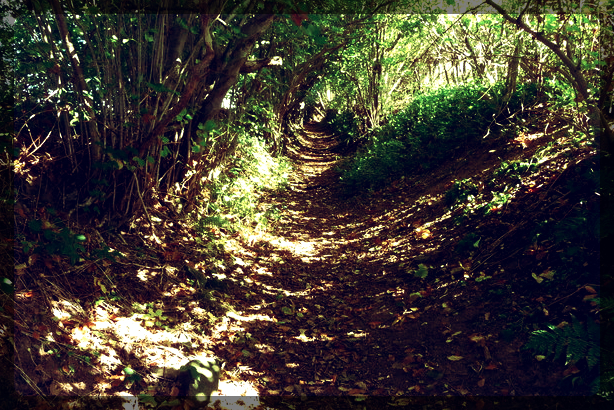 Green lane_fotor